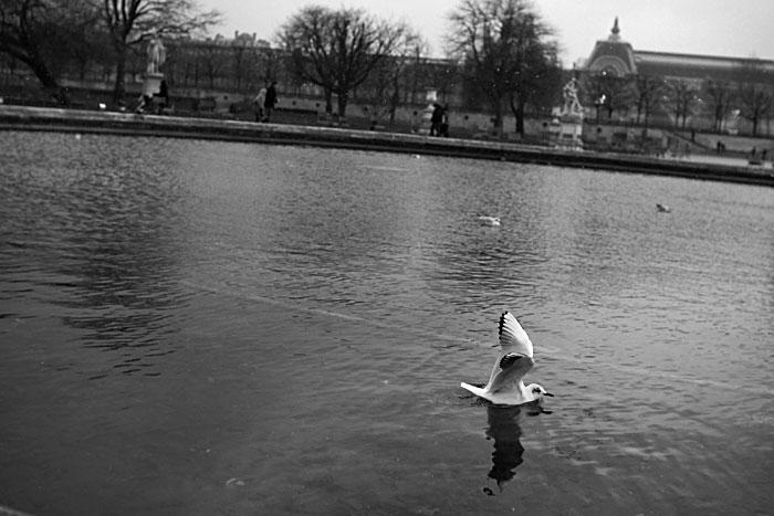 tuileries-fevrier2013_02