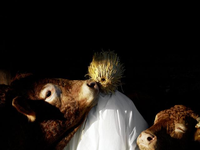 Les Androïdes rêvent-ils de cochons électriques ? - Eric Daru, HumanOx: transport alternatif & modulable pour les animaux  d'élevage. En mode transhumance: transport d'animaux vivants vers les pâtures, © Eric Daru Design
