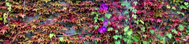 L'automne, vive l'automne !
