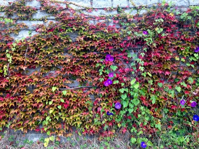 pays-basque-dimanche-automne_003003-2