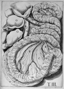 Anatomie. Gastroentérologie . 17e siècle, Bibliothèque numérique Médic@, BIU Santé.