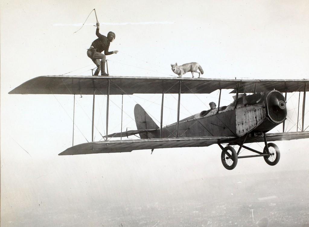 dressage-avion
