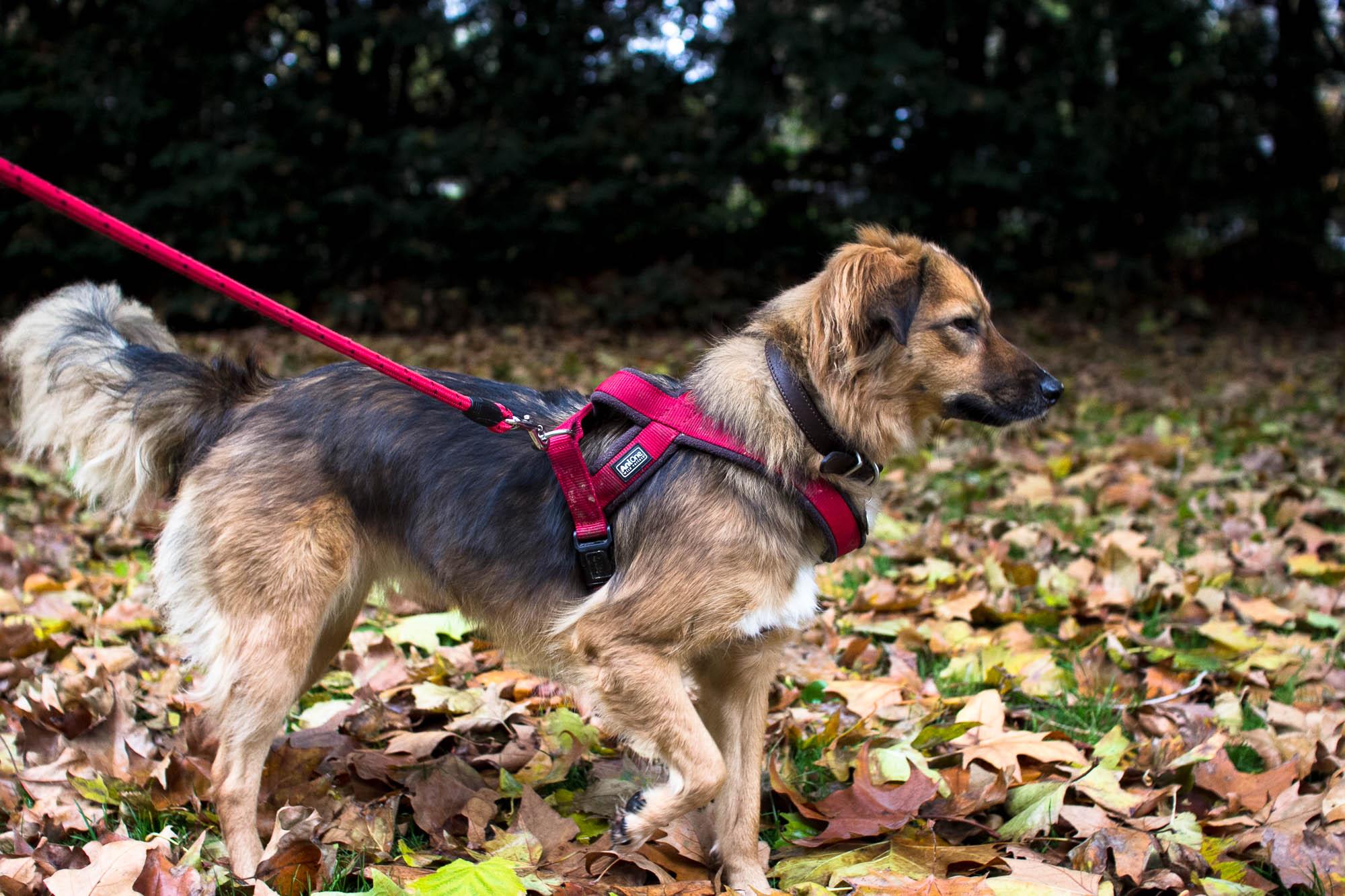 Le chien aux couleurs de l'automne