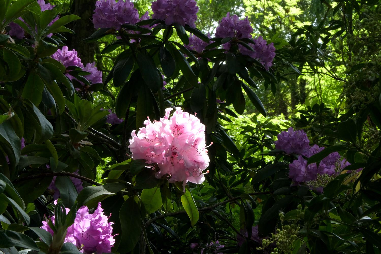 Printemps au Jardin d'horticulture Pierre Schneiter à Reims