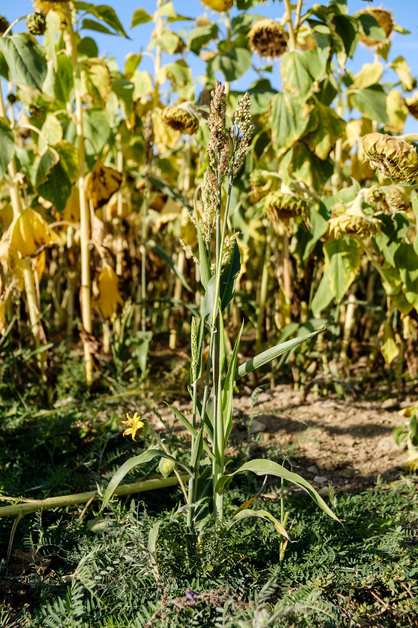 Bienvenue les vers de terre, l'agriculture de conservation et la régénération des sols