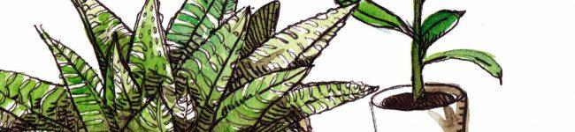 Du vert en intérieur