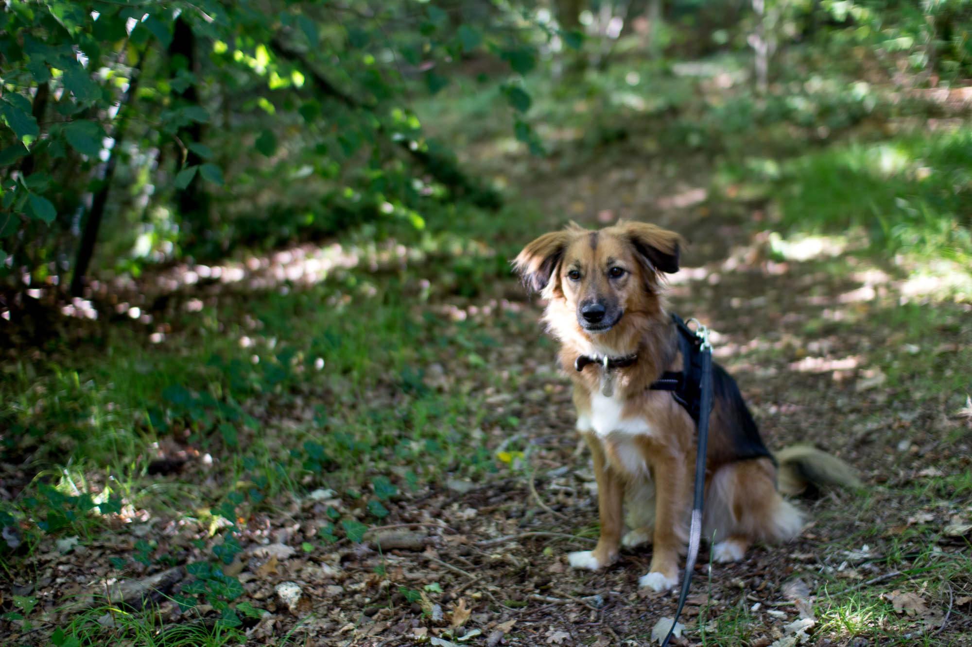 Avoir un chien en appartement : bonheur et concessions
